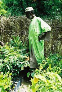 Sidia Sagna dans sa pépinière d'arbres médicinaux rares