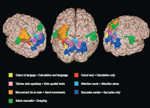Dans l'intimité du cerveau