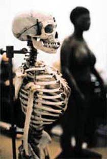 Le squelette et le moulage du corps de Sarah Baartman