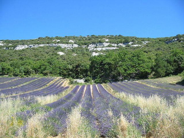 Spéciale Provence