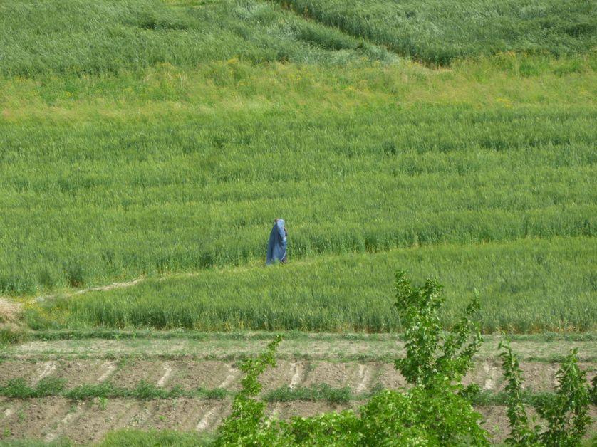 une femme dans les champs
