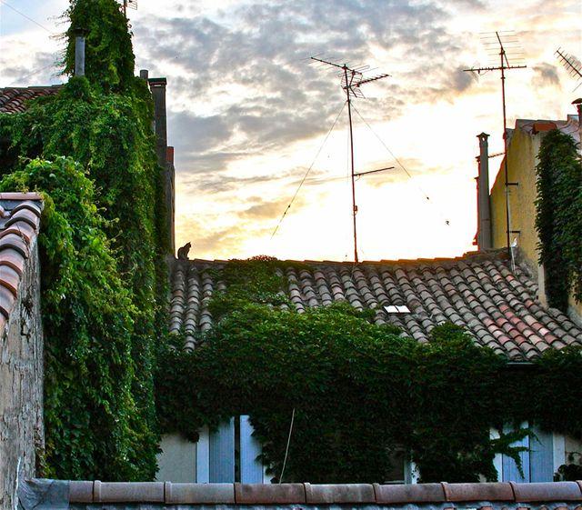 Avignon josse