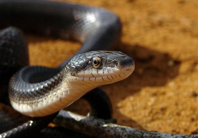 Serpents et venin - Tête au carré