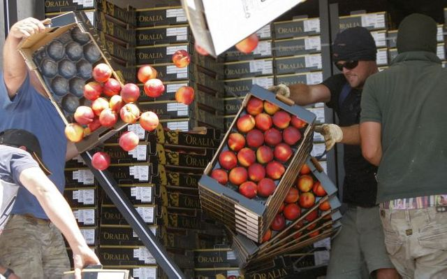 Des membres de la FDSEA détruisent des cageots de nectarines importées d'Espagne