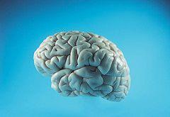 Le cerveau par Aban Nesta