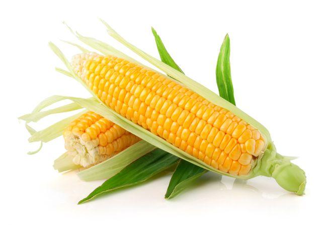Les OGM interdits en France ?