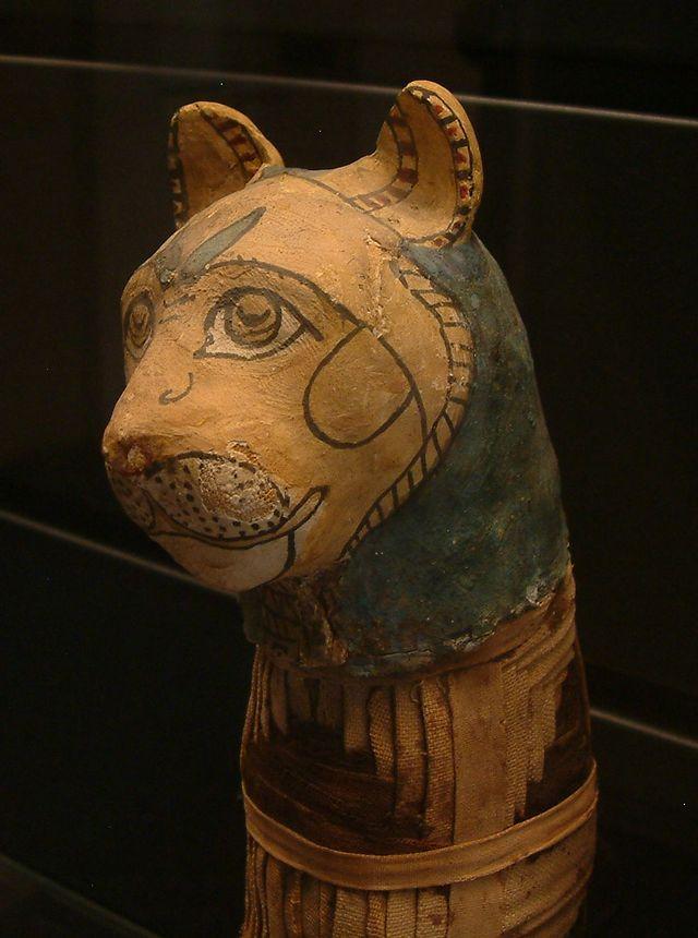 Momie de chat - Musée du Louvre