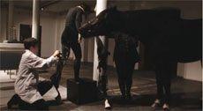 « Que le cheval vive en moi »
