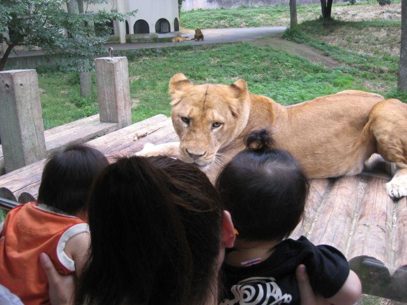 Zoo de Tokyo