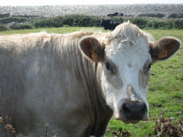 Goury5, Cotentin