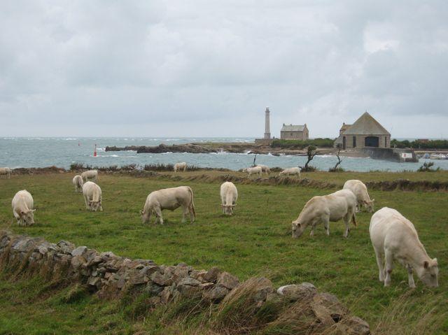 Goury, Cotentin