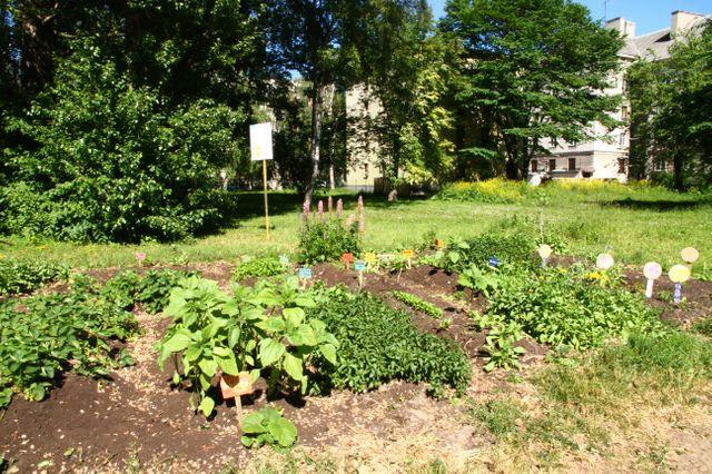 Le Jardin communautaire créé par Madle, Tallinn