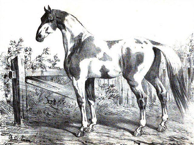 Cheval Montaigne