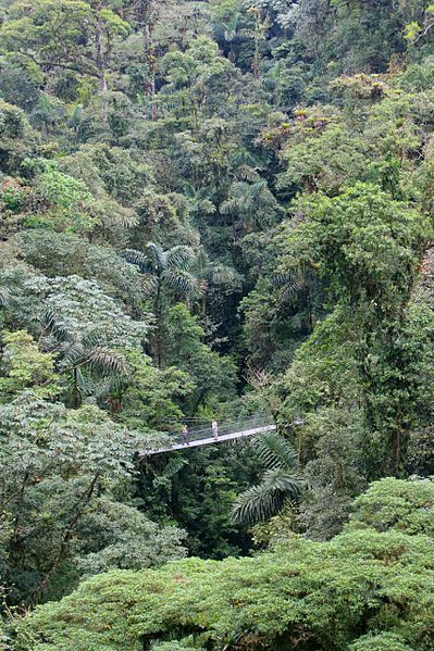 Altitude, canopy level of a rainforest