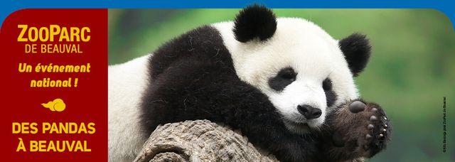 Panda au Zoo de Beauval