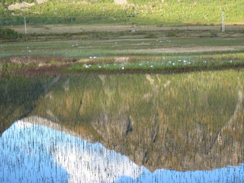 Le lac où Frantz vient observer les oiseaux