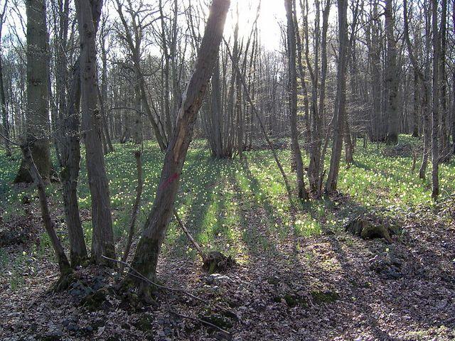 La forêt de Sénart