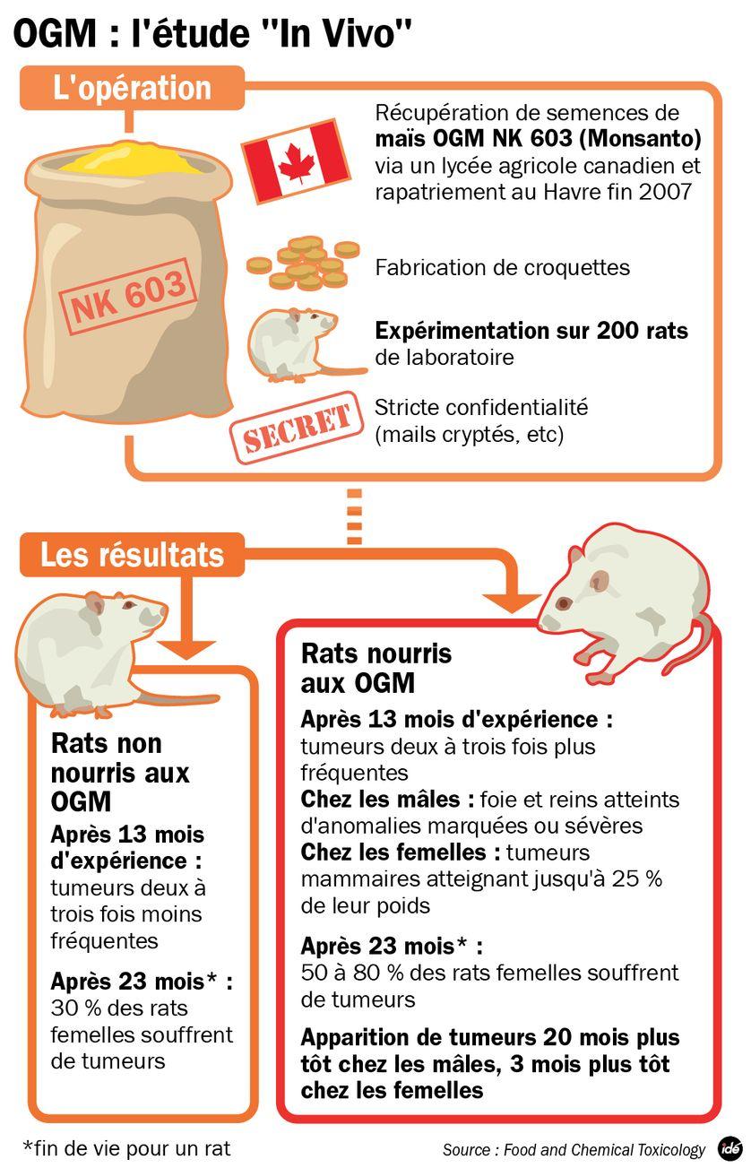 OGM : l'étude qui accuse