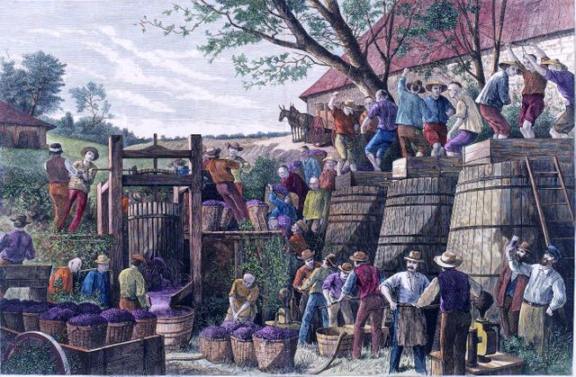 Vendange en Californie par Paul Frenzeny - Fin XIXe siècle