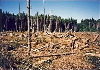 Forêt de Saales suite à la tempête de 1999