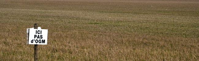 Champ anti-OGM dans l'Yonne, à quelques kilomètres d'Auxerre