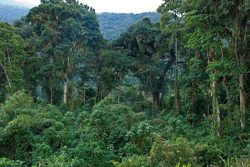 La jungle près de Vilcabamba