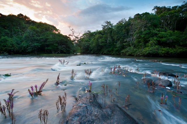 Cascade d'eau dans la forêt guyanaise