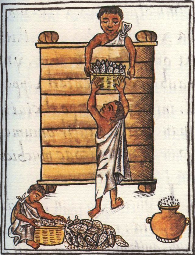 "Stockage du maïs par les Aztèques - ""La Historia General de las Cosas de Nueva Espana"" ou Codex florentin - Fin XVIe siècle"