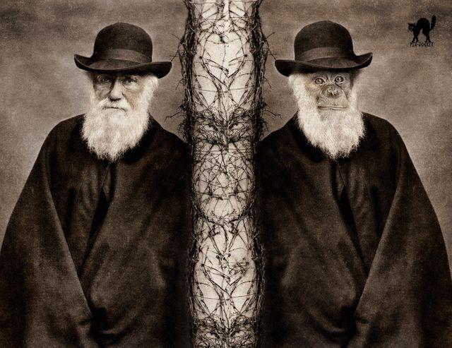 Darwin, l'uomo e la scimmia...