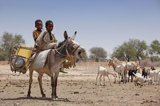 Tchad - photo prise le 24 mars 2012 à N'Djamena
