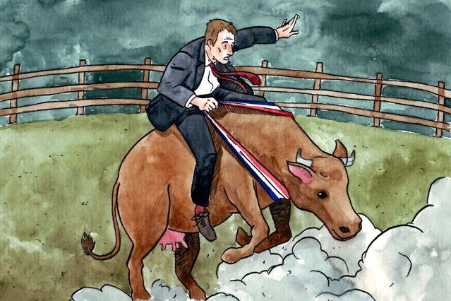 maire vache