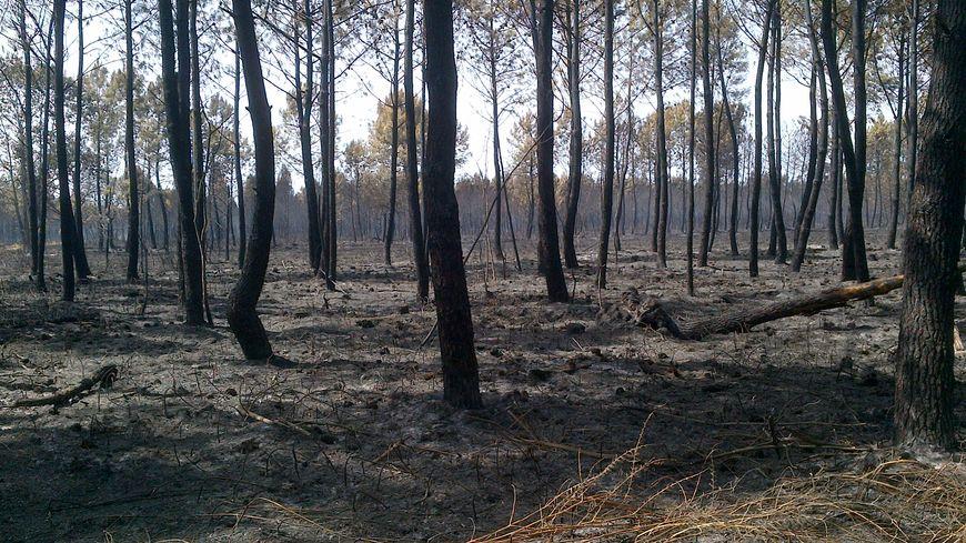 Feu forêt incendie Lacanau 0812