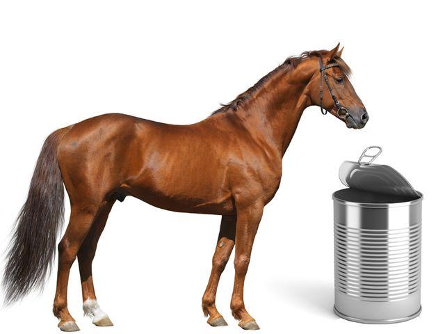 du cheval dans toutes les conserves