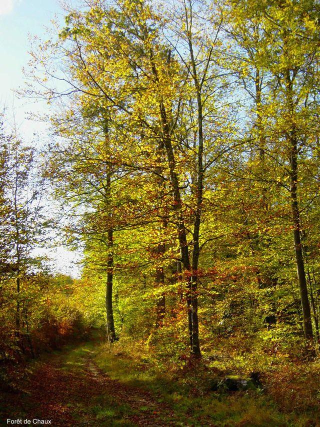 Forêt de Chaux