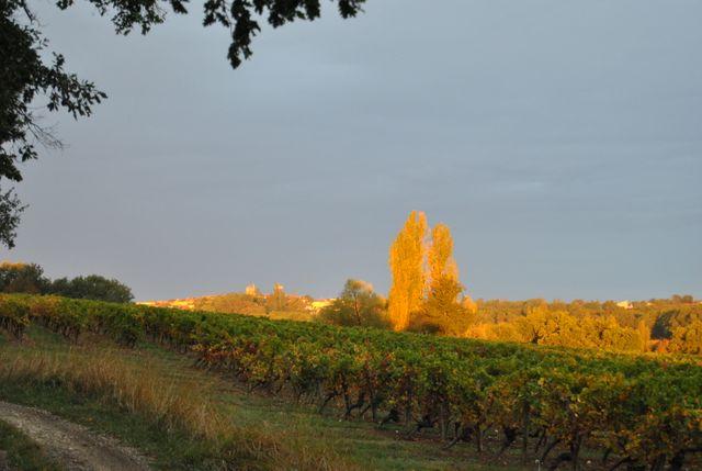 Vignoble à Gondrin (Gers)