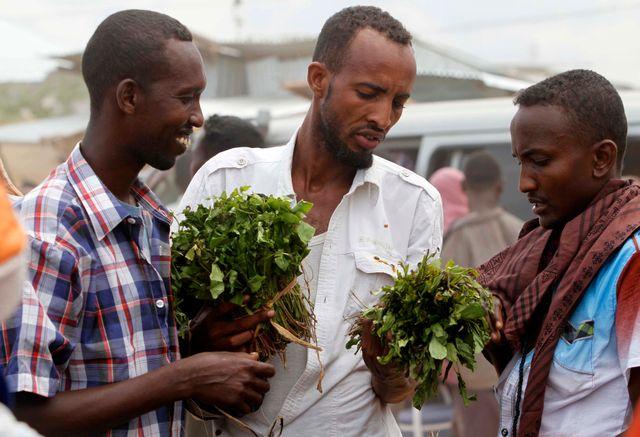 Le khat se retrouve souvent dans les pays africains (ici en Somalie)