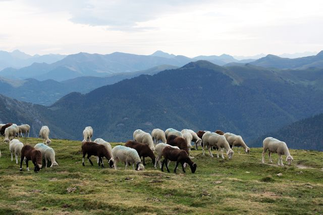 L'élevage en estive à Nistos (Hautes-Pyrénées)