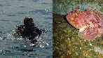 Baptêmes de plongée sous-marine destinés aux lycéens périgourdins
