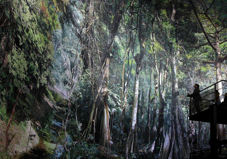 Le panorama Amazonia