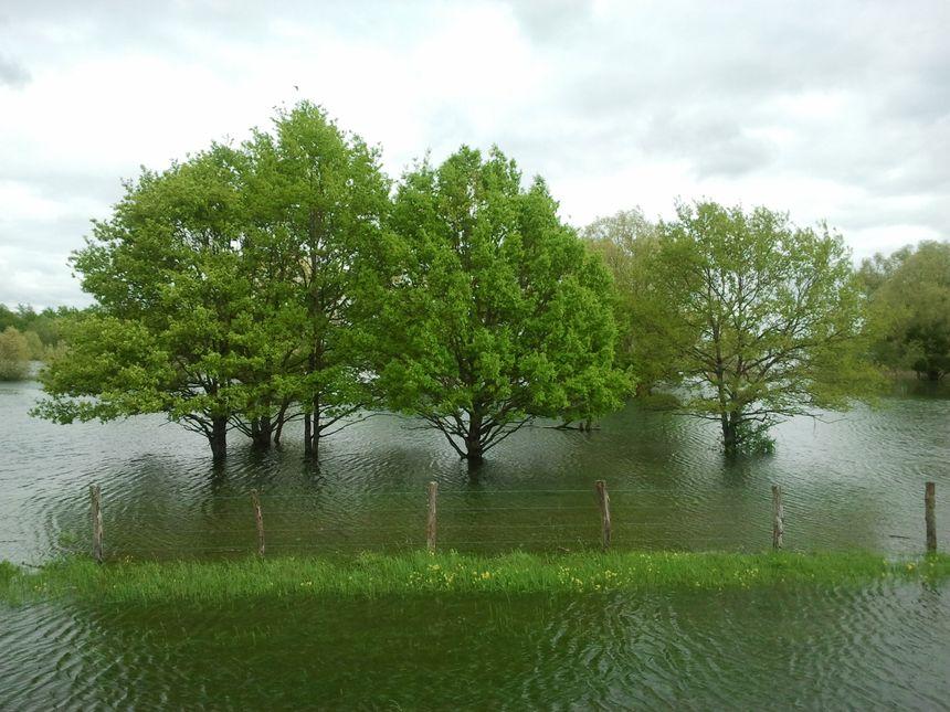 Le niveau du lac du Der n'a jamais été si haut