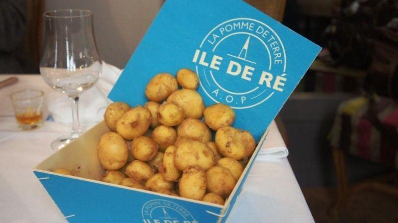La pomme de terre de l'île de Ré enfin de retour