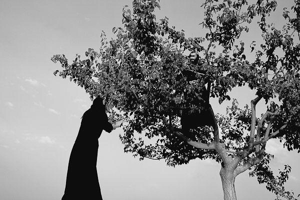La cueillette des pistaches dans les arbres par les soeurs orthodoxes