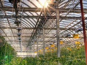 La ferme Lufa - Montréal