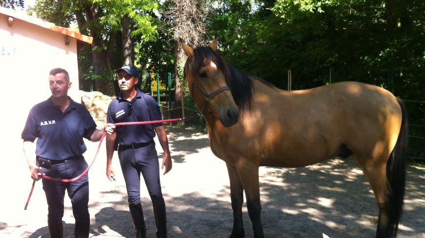 Un nouveau cheval dans la brigade équestre de Montélimar