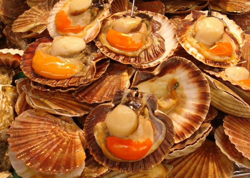 Coquilles St-Jacques - FB Provence