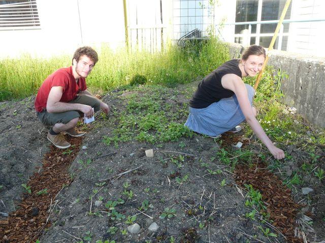 Faire pousser des légumes à récolter à la rentrée universitaires...