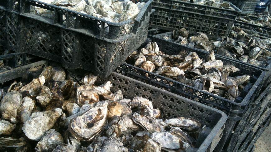 Pas d'huîtres d'Arcachon pour le pont du 8 mai