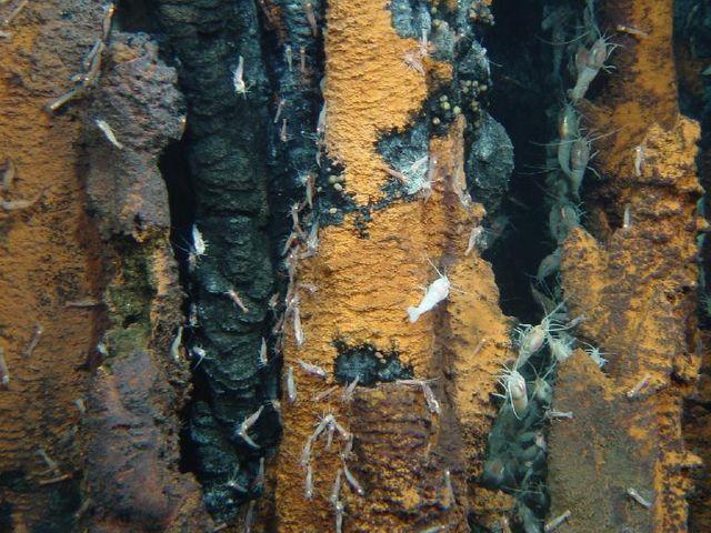 . Photo sous-marine prise par le Victor 6000 au cours de la campagne Exomar 2005.