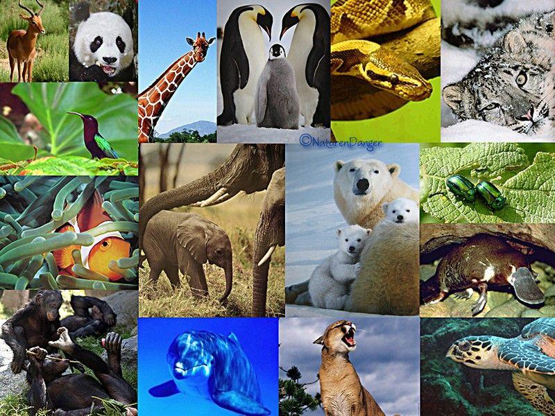 biodiversite_animale.jpg