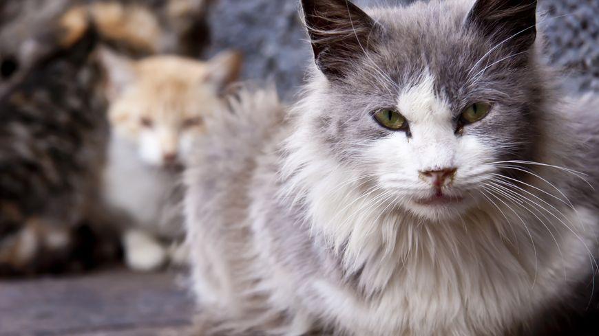 Une cinquantaine de chats et de chiens sont accueillis par la SPA de Belfort.